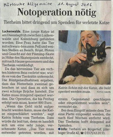 katzen in not